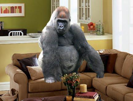Gorilla-room